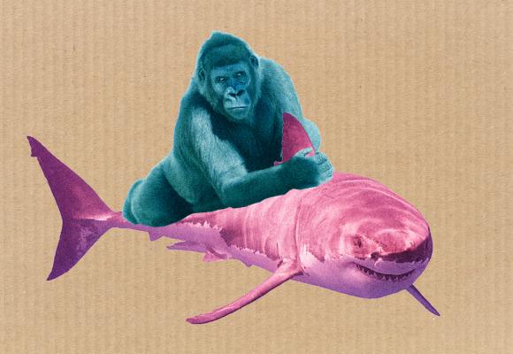 Žralok vs. Gorila aneb boj Jaroslava Haščáka s vlastní minulostí
