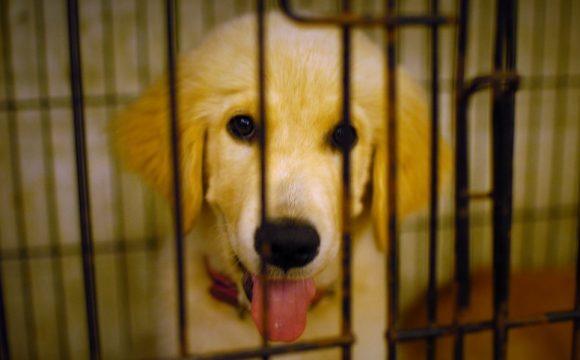 Cena za mazlení: Nelegální obchod se psy je na vzestupu