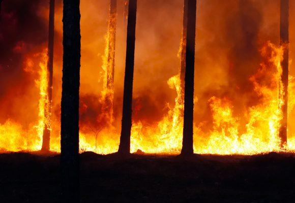 EU: Zelenáč skoncuje se zločiny proti přírodě