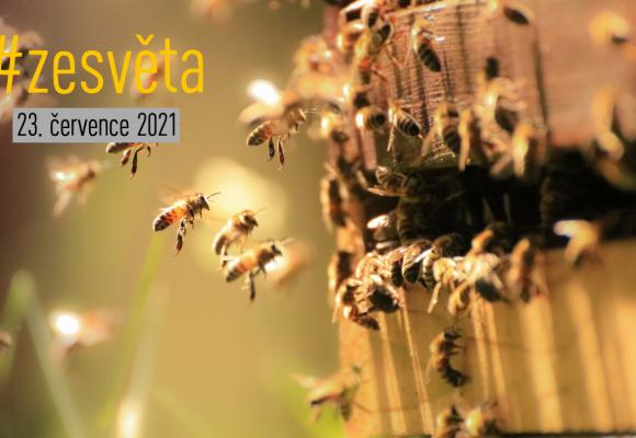 #zesvěta: Europol brání české včely