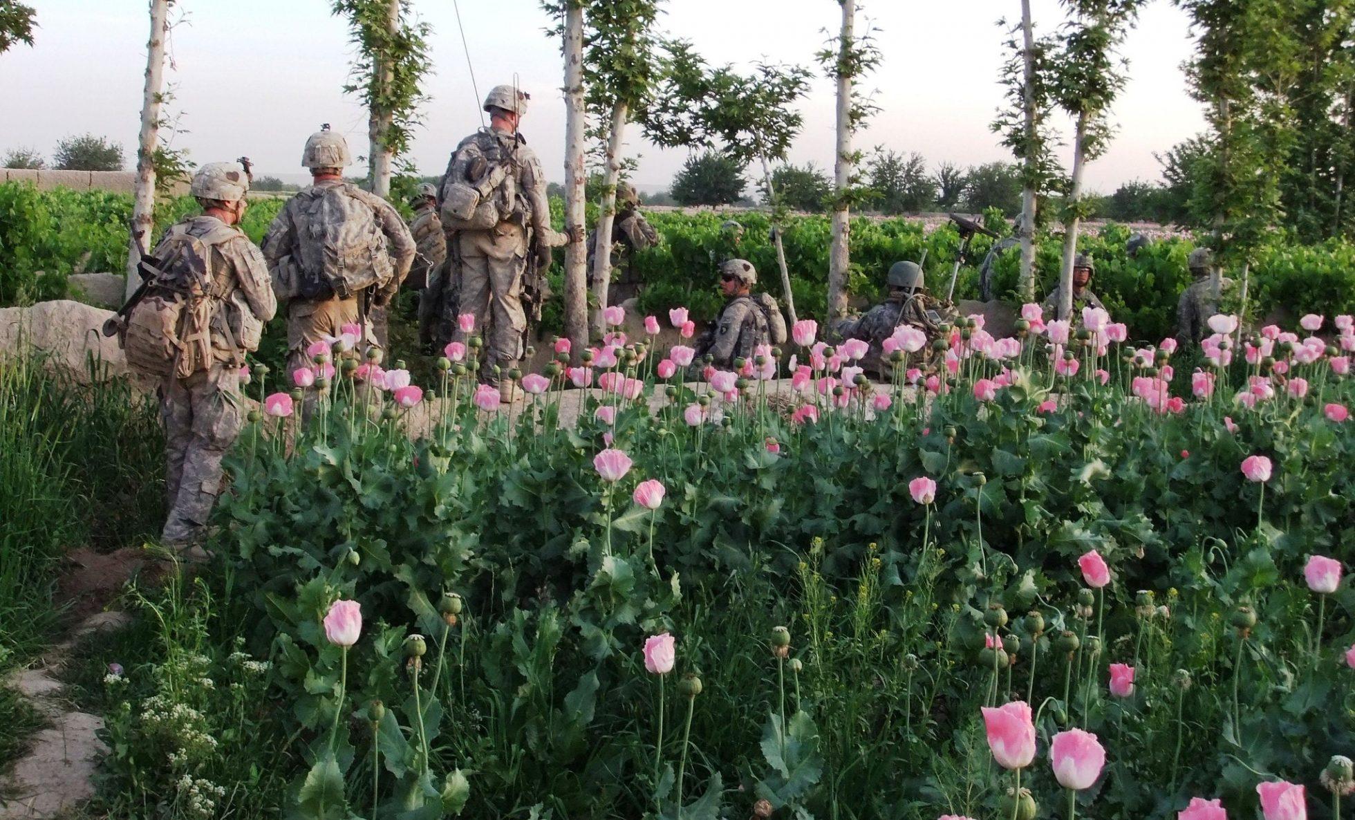 Obchod s drogami jako primární zdroj příjmů Tálibánu