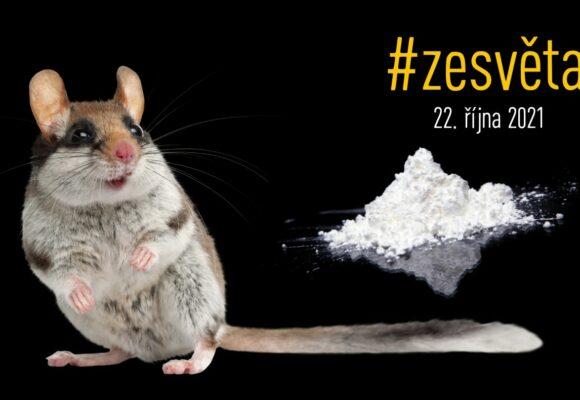 #zesvěta: Zátahy na kokain, myši a marihuanu